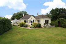 Bungalow in Raymonds Hill, Axminster...