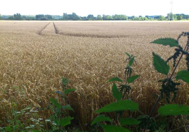 fields 009.jpg