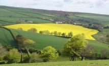 Land in Sherford, Kingsbridge