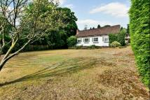 Detached Bungalow in Queens Hill Rise, Ascot...