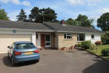 Detached Bungalow for sale in West Hill, Ottery St Mary