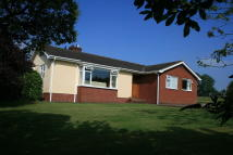 Detached Bungalow for sale in Luton, Payhembury