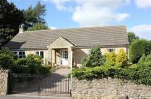 Detached Bungalow for sale in Hamsterley...