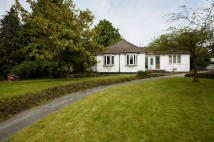 Bungalow for sale in Westcott, Surrey