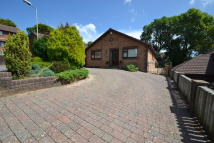 Detached Bungalow in The Limes, Fenwick Drive...