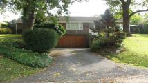 Bungalow to rent in Old Bath Road, Sonning