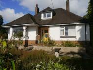 Detached Bungalow for sale in Bryndir, Westwood Park...