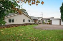 Bungalow for sale in Swithland Lane, Rothley...