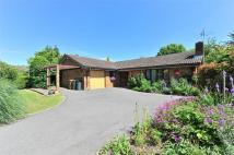 3 bed Detached Bungalow for sale in Merrow Copse, Merrow...