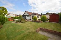 Detached Bungalow in Limes Avenue, Bramford