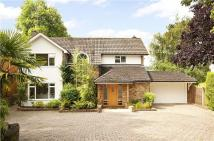 Character Property for sale in Millfield, Berkhamsted...