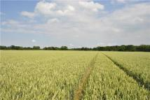 Land in Beachamwell, Swaffham...