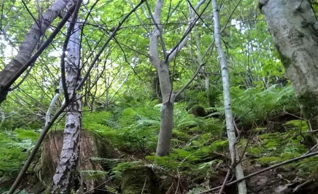<u> Woodland</u>