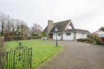 Detached Bungalow for sale in Acaster Lane...
