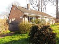 Bungalow for sale in Clay Lane, Beaminster...