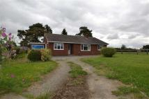 3 bed Detached Bungalow to rent in Pentre Lane, Coedway...