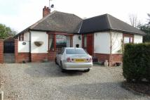 Detached Bungalow for sale in Shepherds Lane, Bicton...