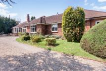 Bungalow for sale in Hastings Road, Battle...