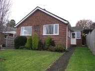 Detached Bungalow to rent in Lacy Drive, Wimborne...
