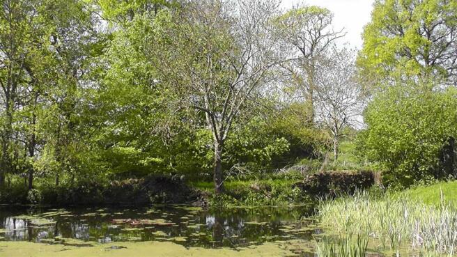 View Across Pond