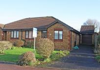 2 bed semi detached property for sale in Cypress Close, Honiton