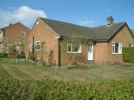 Bungalow to rent in Olive Way, Harrogate