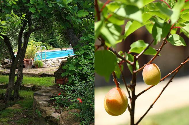 Pool &fruits tree