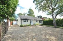 4 bed Detached Bungalow to rent in Hiltingbury Road...