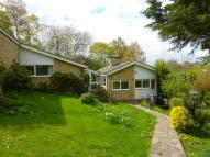 4 bed Semi-Detached Bungalow to rent in Sandford Park...
