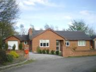 Bungalow for sale in Chirk Green, Chirk...