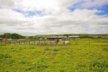Equestrian Facility house in Back Lane, Accrington...