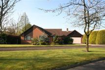 Detached Bungalow for sale in Broadwood, Lostock...