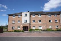 2 bed Flat in Cypress Lane, Hamilton