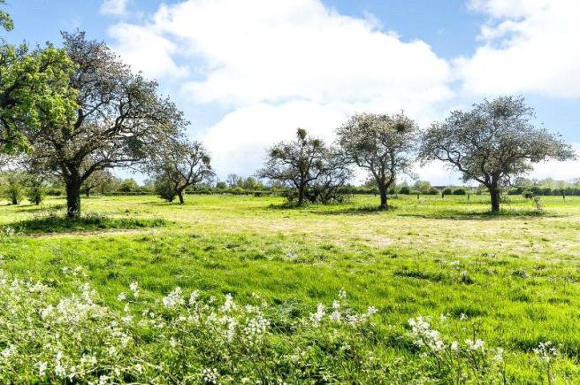 Pasture and Orchards