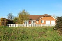 Detached Bungalow to rent in Battisford, Stowmarket...