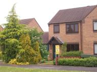 semi detached house to rent in Celandine Way...