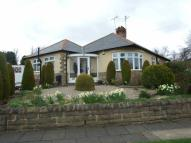 Semi-Detached Bungalow to rent in Woodcrest Road...