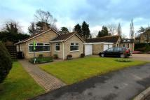 Detached Bungalow for sale in The Chase, Hurworth