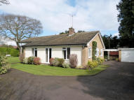 Detached Bungalow to rent in Crossways Road, Grayshott