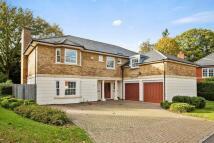 Detached property to rent in Lytton Park, Cobham...
