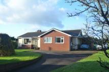 Detached Bungalow for sale in Payhembury