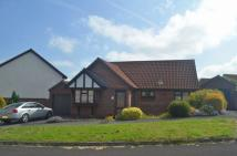 Detached Bungalow for sale in Honiton