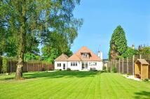 Bungalow to rent in Epsom Lane North, Epsom...