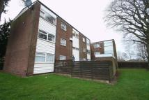 Shelsy Court Flat to rent