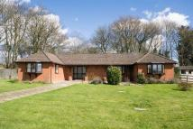 Detached Bungalow to rent in Ockham Lane, Cobham...