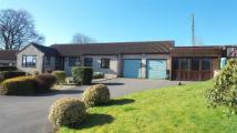 Detached Bungalow for sale in Combe St Nicholas, Chard