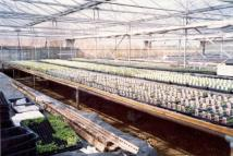 Commercial Property in Baldersby Plant Centre...
