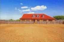 4 bed Equestrian Facility property for sale in Crowland Road, Eye Green...