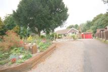 64 Hollycroft Detached Bungalow to rent