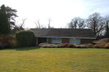 3 bed Detached Bungalow to rent in Burgess Hill